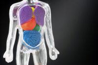 organs2