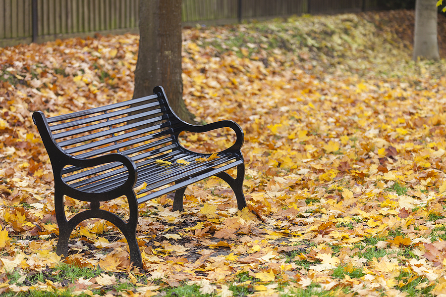 for an article on suicide awareness, an empty bench with autumn leaves on the ground behind it